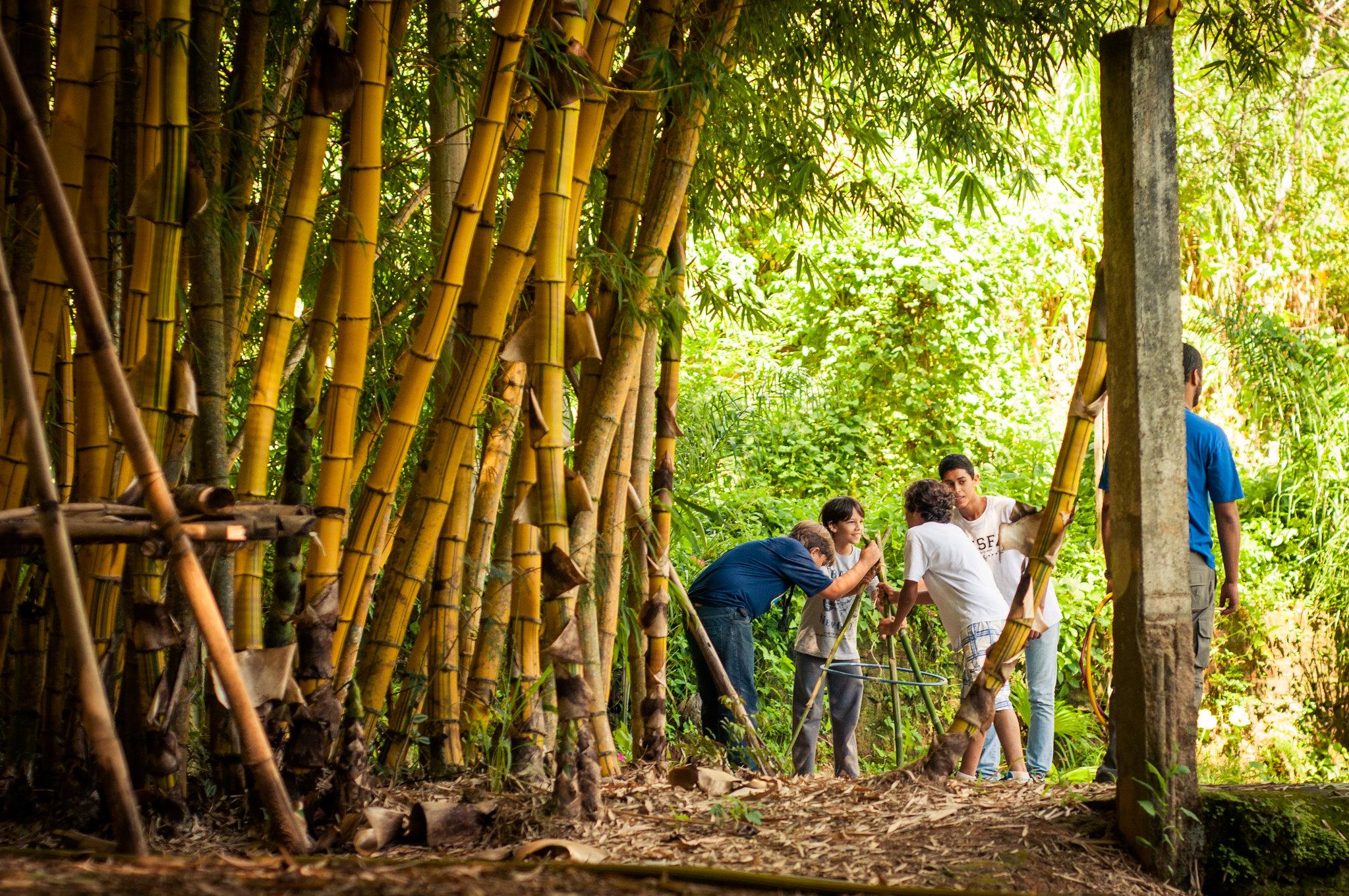 Atividade no bambuzal